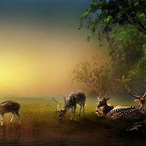 THE DEER'S LAND by Zainal Arifin  - Digital Art Things