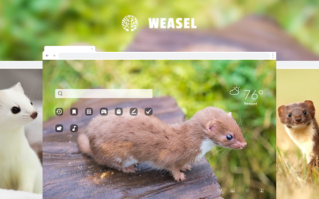 Weasel HD Wallpapers New Tab