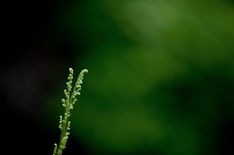 Photo: about as green as you can get...  Goodnight all...   #floralphotography  #macromonday  #nikon  #naturephotography  #naturemonday