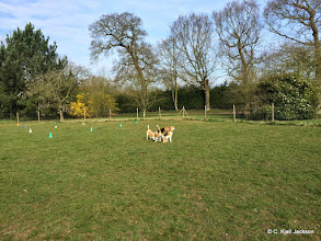 Photo: Beagle meet - Belle, Jess and Buddy