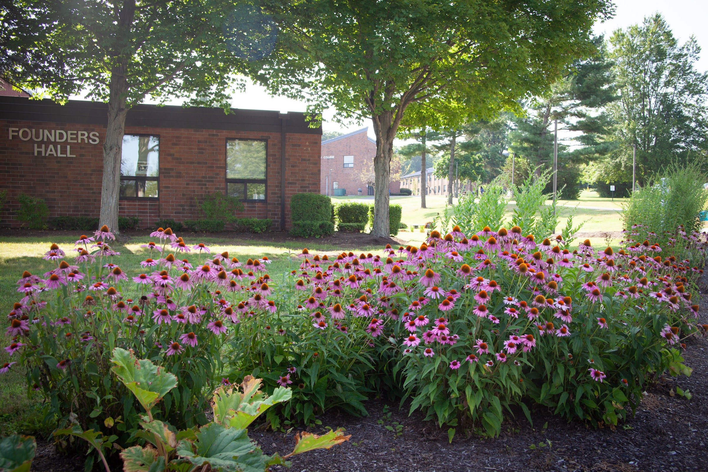 flower garden facing Founders