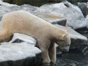 Photo: Das muss Knut genauer unter die Lupe nehmen ;-)