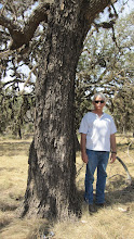 Photo: This tree measured ever so slightly bigger than the Elam Creek tree, keeping it a national champ -- at least a little while longer!