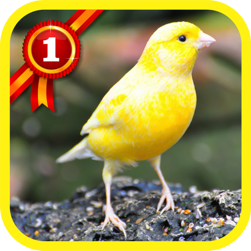 Canary Bird.. file APK for Gaming PC/PS3/PS4 Smart TV