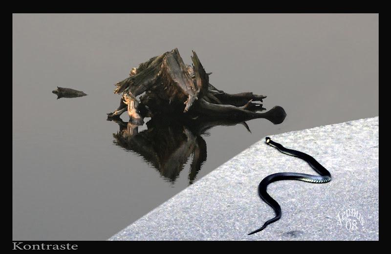 Photo: Wasserschlange