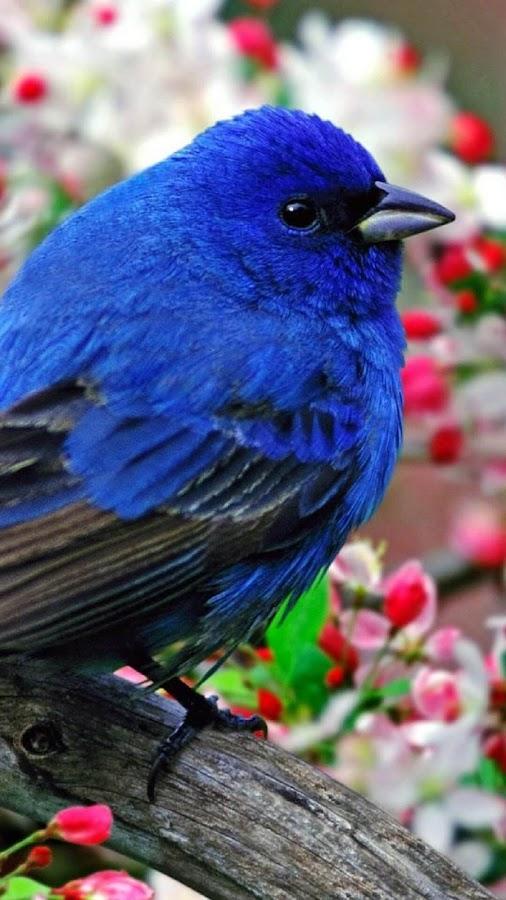 تطبيق يقدم صور طيور خلابة جدا لجعلها خلفية لجهازك و بسهولة فائقة Qr3ABk1xqvB6qEOFd01e
