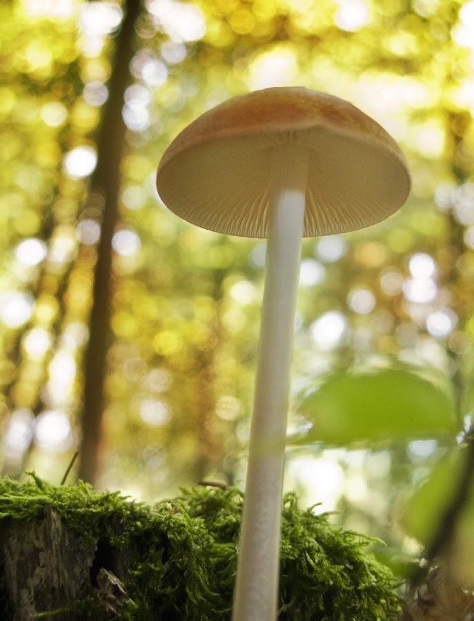 by Gašper Kamenšek - Nature Up Close Mushrooms & Fungi
