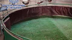 En el interior de la nave fueron hallados 60 gallos de pelea.