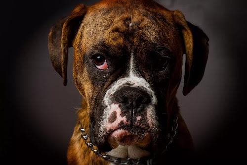 MR.watson by Joe Hamel - Animals - Dogs Portraits