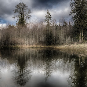 Pond life on Salt Spring Island by GThomas Muir - Landscapes Prairies, Meadows & Fields ( winter, sky, reflections, mirror image, pond, salt spring island )