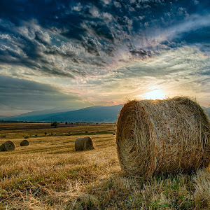 At Sunset In The Field by Plamen Petkov.jpg