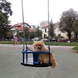 by Slavica Trajkovic - Animals - Dogs Portraits