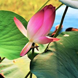 by Praveen Kulshreshtha - Flowers Flower Gardens