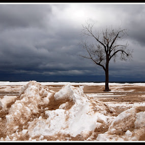 One is The Loneliest Number by Vickie Barnhill - Landscapes Weather