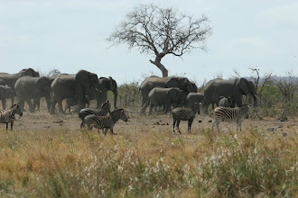 Photo: Kruger National Park. Nshawu Wasserloch