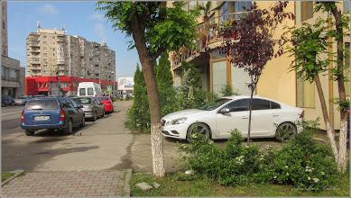 Photo: Cununița (Spirea cinerea Grefsheim) - din Turda, Calea Victoriei - 2019.05.18