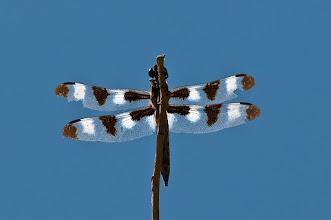 Photo: Darning needle