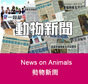 news on animals