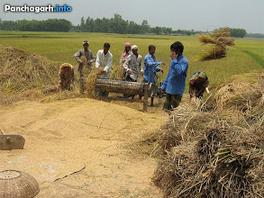 Photo: Farmers in the paddy field