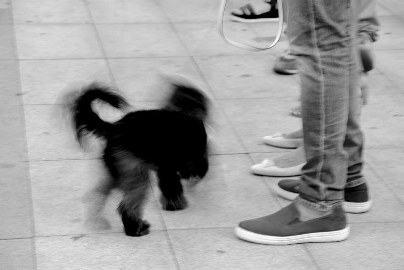 Il passo del cane di maria_pia_russo