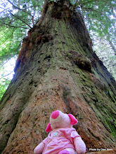 Photo: (Year 2) Day 360 - Pippa at the Bottom of a Redwood (USA)