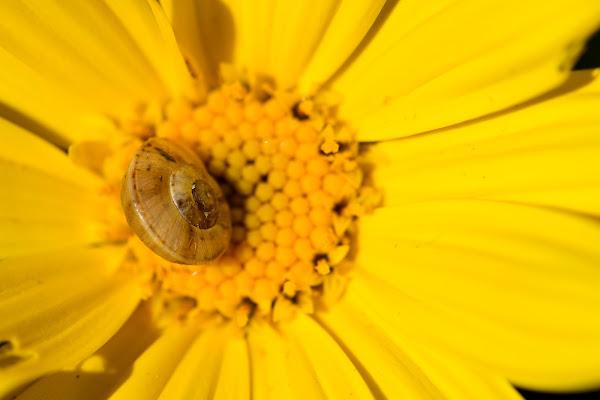 La signora in giallo di gadani's idea