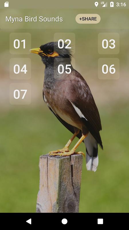 Myna Bird Sound Ringtones APK 1 3 Download - Free Entertainment APK