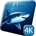 Deadly Sharks 4K Live Wallpap icon