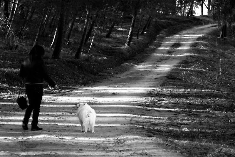 Ultima passeggiata di Aron di AngeloEsse