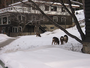 Photo: Deer on the Banff Conference Center grounds.