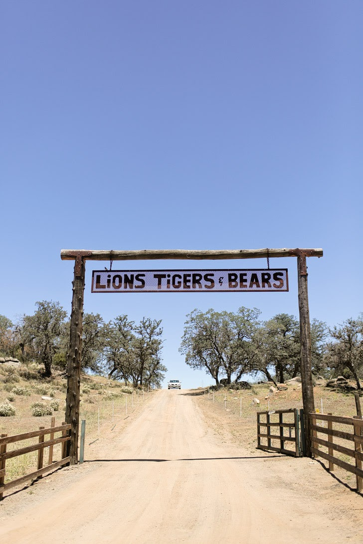 Lions Tigers and Bears Alpine CA Exotic Animal Rescue.