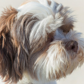 Pete by Dave Lipchen - Animals - Dogs Portraits ( pete )