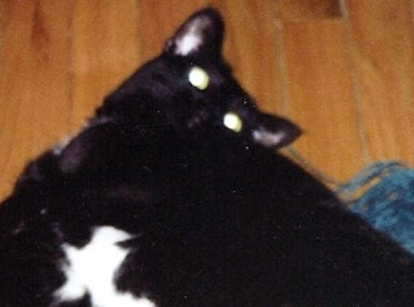 Crystal was an adult kitty when we met her. She was not friendly at...
