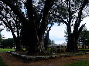 Photo: Trees inside the Bhoga Nandishwara temple.