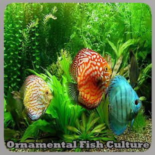 Okrasné rybky Kultura - náhled