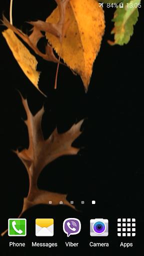 秋はビデオライブ壁紙を残します