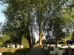 Photo: platanen op de begraafplaats