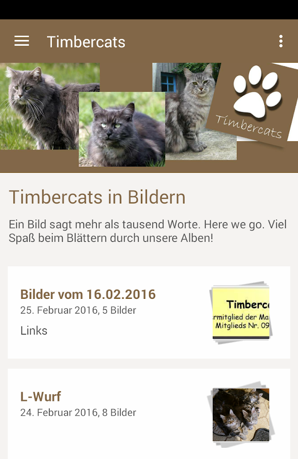 Timbercats- screenshot