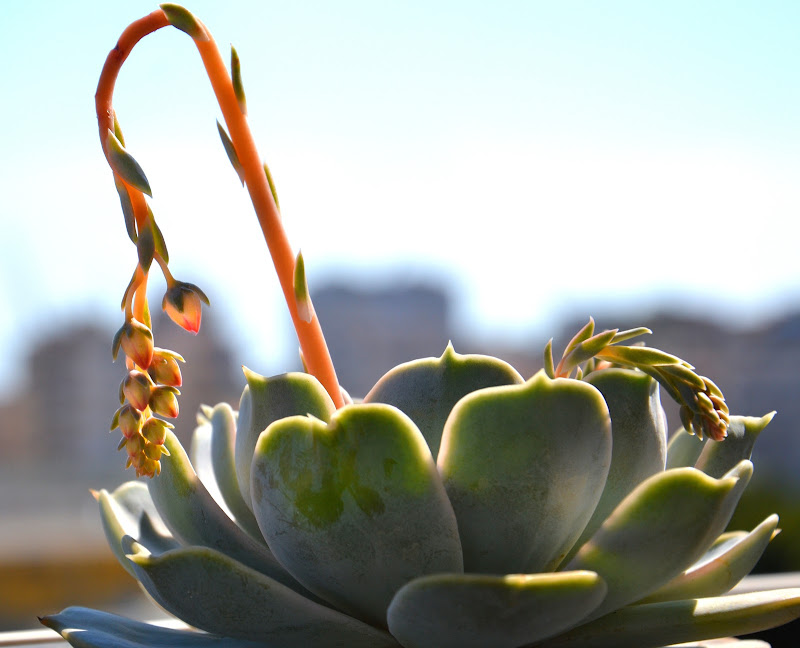 La primavera delle piante grasse di Giacomo Barone