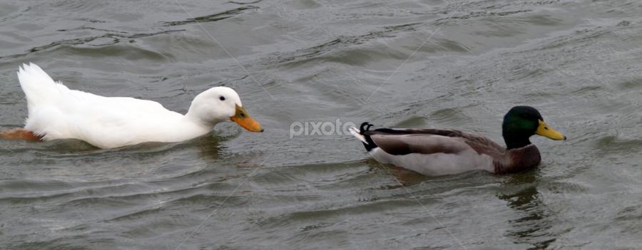 by Darrell Tenpenny - Animals Birds