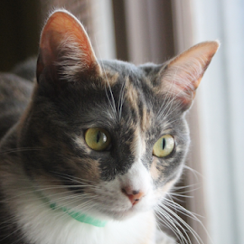 Moment With Glory by Ted and Nicole Lincoln - Uncategorized All Uncategorized ( cat, wiskers, pet, fur, kitty )