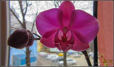 Photo: Turda-Bl.B15, Ap.8 - prima floare a orhideei - 2018.02.2