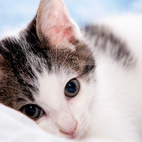 Sad kitty by Luana Racan - Animals - Cats Kittens ( kitty cat cry tears sad blue, , baby, young, animal, #GARYFONGPETS, #SHOWUSYOURPETS )