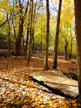 Photo: Fallen leaves on a path through the woods at Hills and Dales Park in Dayton, Ohio.