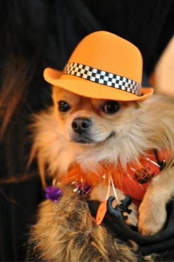 狗时装设计