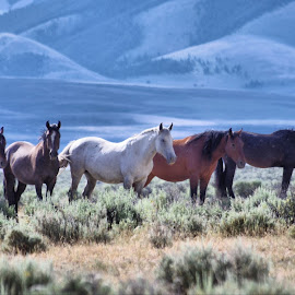 Five by Dave Bower - Animals Horses