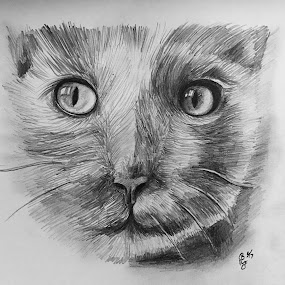 Cat by Anika McFarland - Drawing All Drawing ( pencil, cat, cat drawing, pencil drawing, drawing )