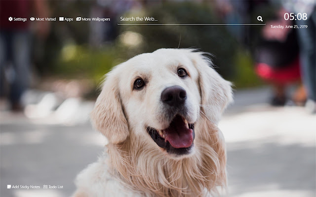Golden Retriever Wallpaper HD New Tab Theme