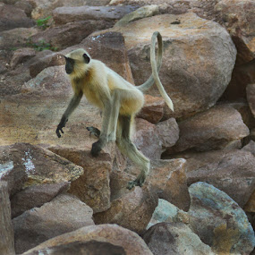 lets climb by Vaibhav Purohit - Animals Other Mammals