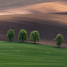 alley chestnuts by Evžen Takač - Landscapes Prairies, Meadows & Fields ( jižní morava, czech republic, meadow, trees, landscape, chestnut trees, fields )